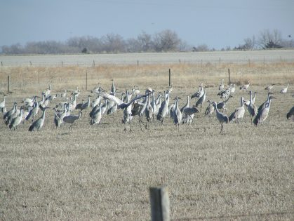 Photo courtesy of Katie Stacey/Nebraska Game and Parks Commission.