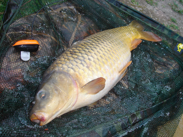Happy Carp Fishing